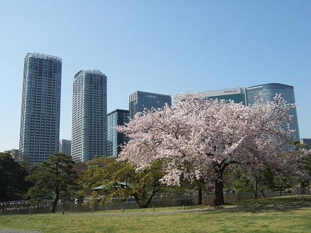 shiodome-april.JPG