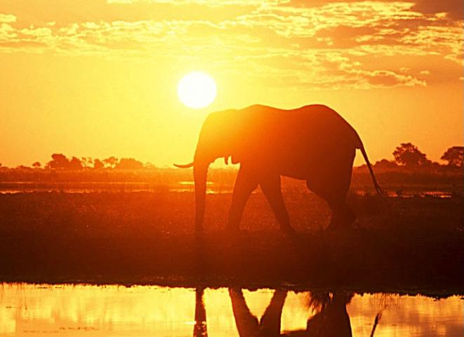 elephantandsunset