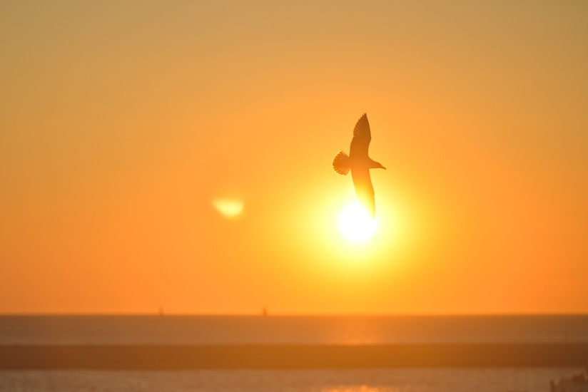 sunset-bird-sunrise-animal-large